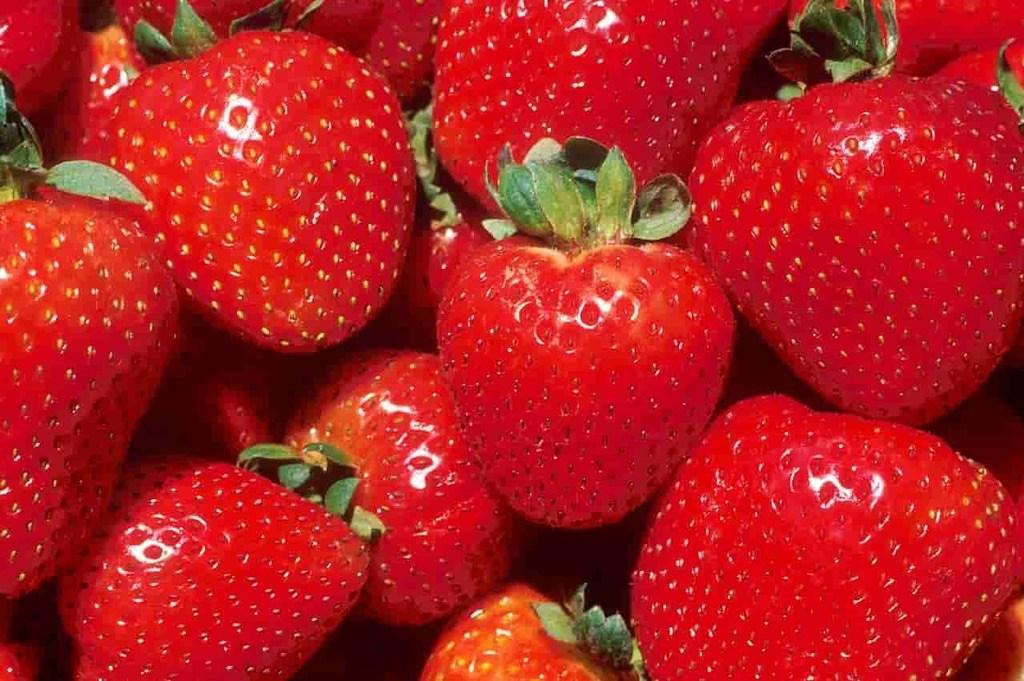 Can Rabbit Eat Strawberries