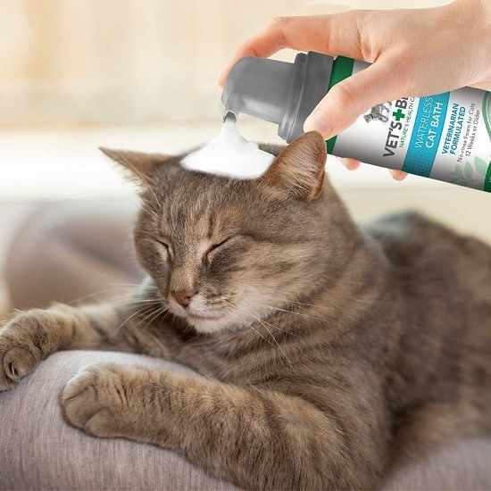 cat-flea-shampoo