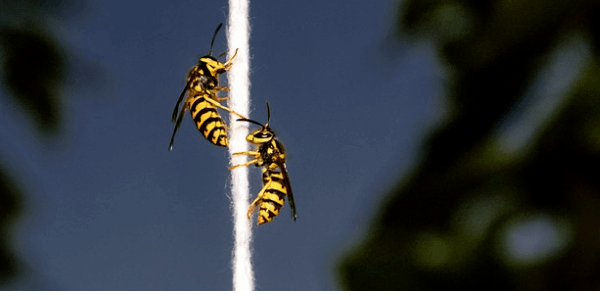 insect leaves its stinger