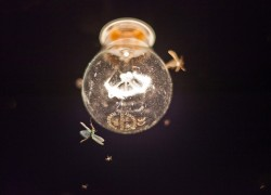 3+ Reasons Why Are Bugs Attracted To Light