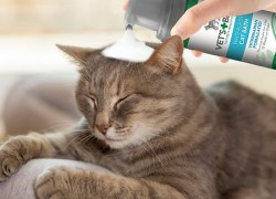 9+ Best Cat Flea Shampoo (Buying Guide)