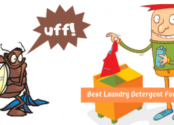 Best Laundry Detergent For Bed Bugs
