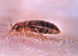 Bed Bugs: Where Do Hide & Come From?