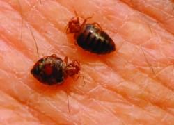 13+ Best Bed Bug Treatment: Bully, Spray, Trap, Powder, Mattress