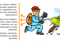 Chemical Compound Used For Killing Pest – The Ultimate Truth