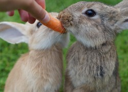 Can Rabbits Eat: Apple, Celery, Cucumber (110+ Foods)