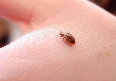 bed-bugs-find-look-like-monitor
