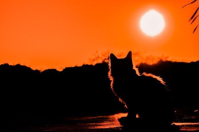 cat on sunset