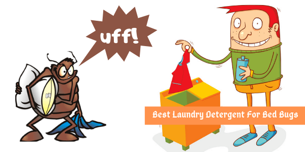 Best Detergent For Bed Bugs